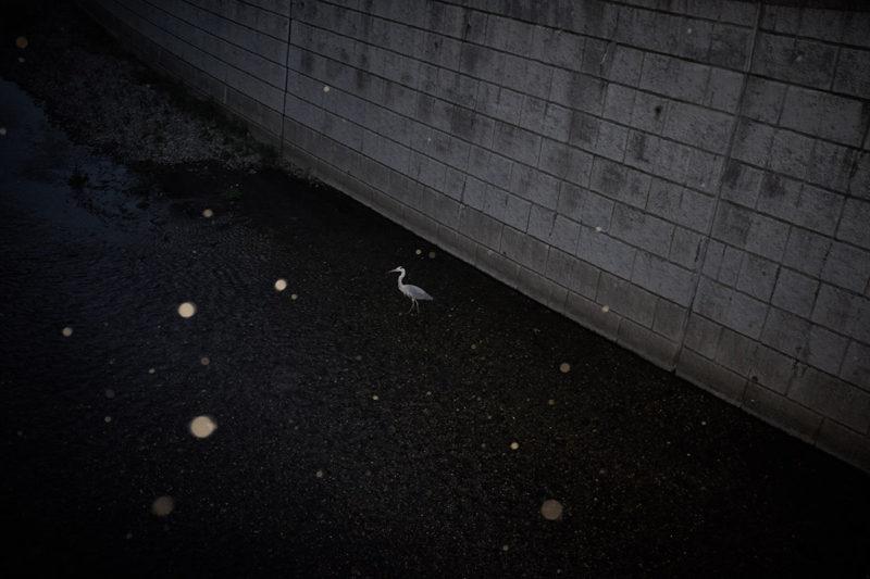 Koji Aono Wysinwyg 09