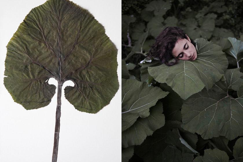 Matteo Palmieri Helichrysum 10