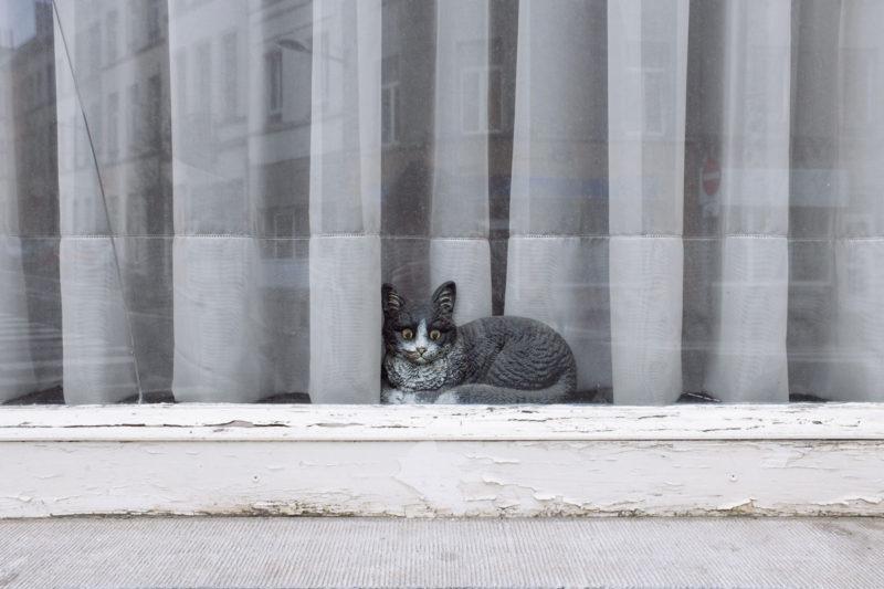 Feixa Jean Luc Public Window 04