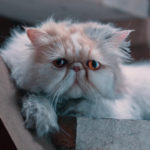 Cinematographer Luca Costantini talks about the saddest cats ever that made a big statement