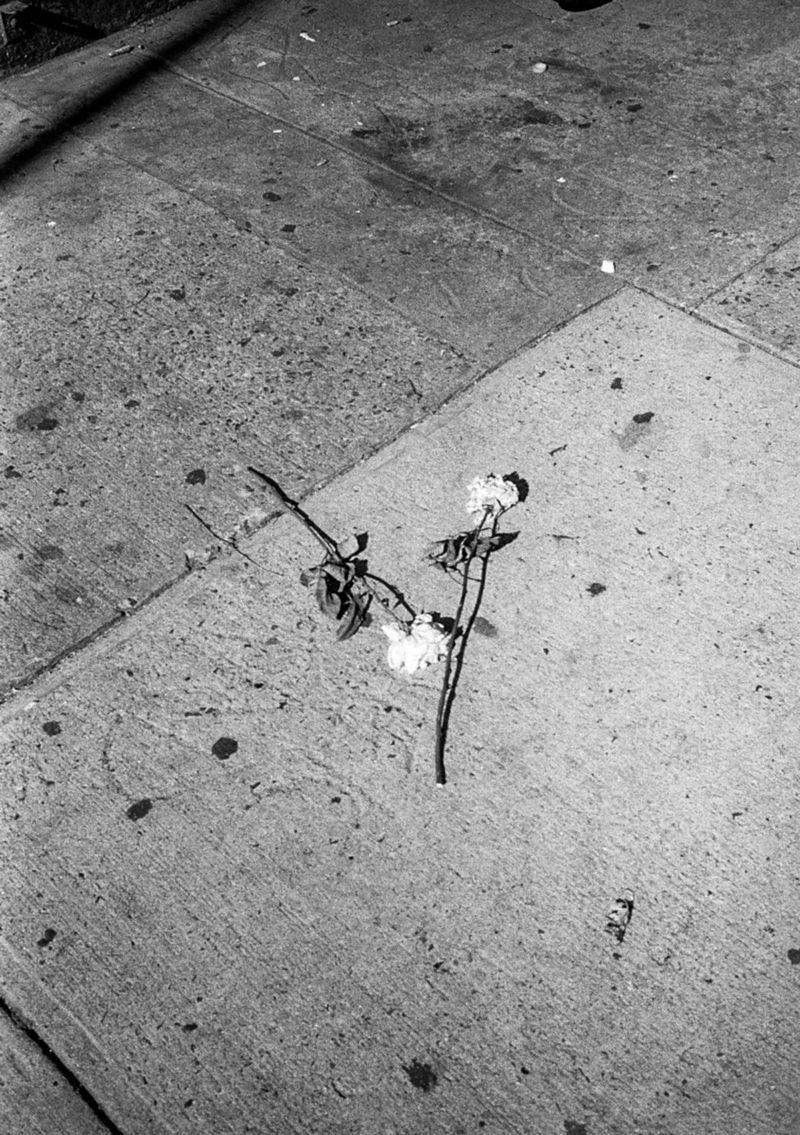 Ysa New York 20
