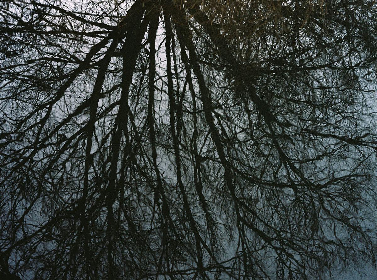 Francesca McColl Wild Women Tree Reflection 10