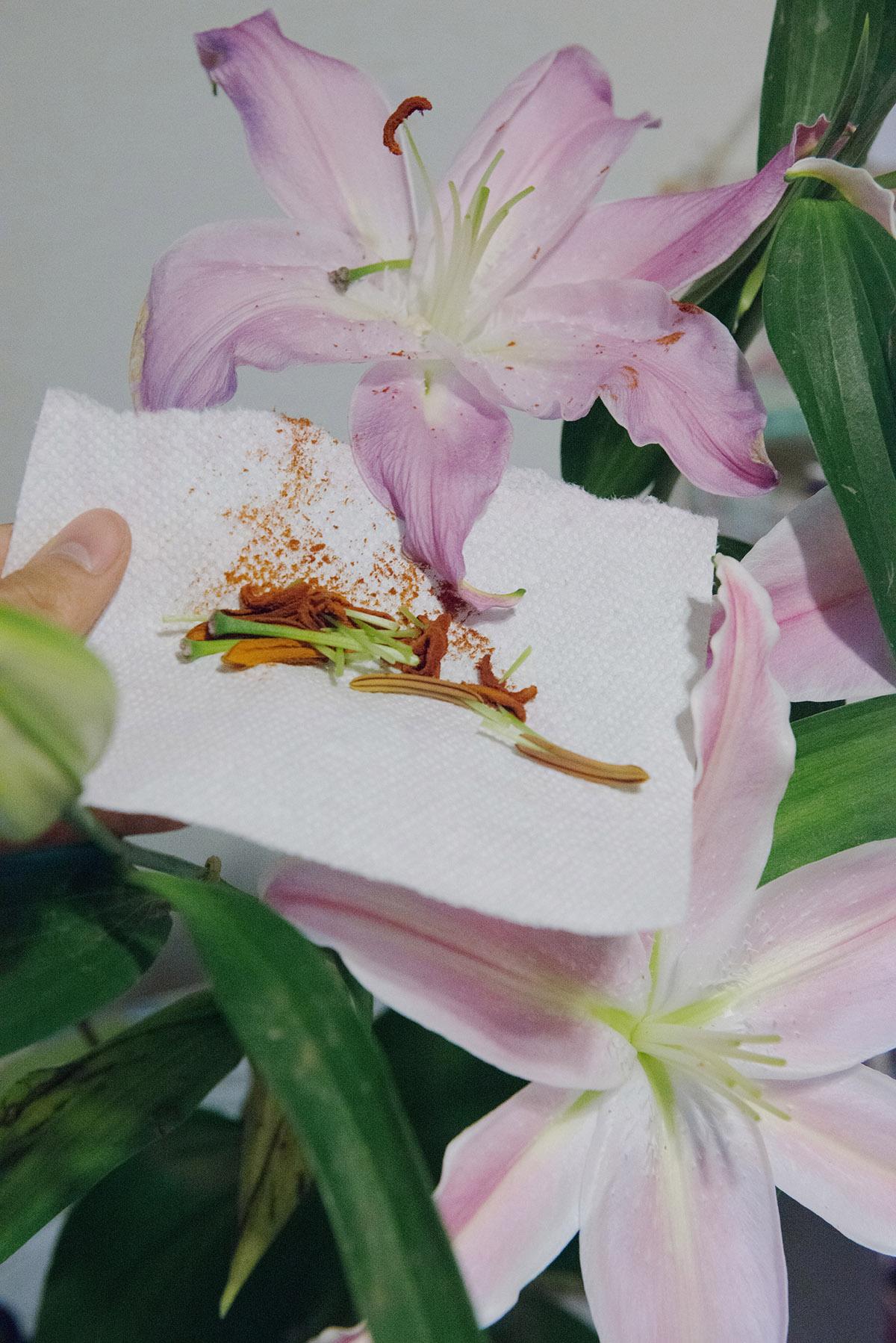 KaiWai Wong Boredom Untitled 01