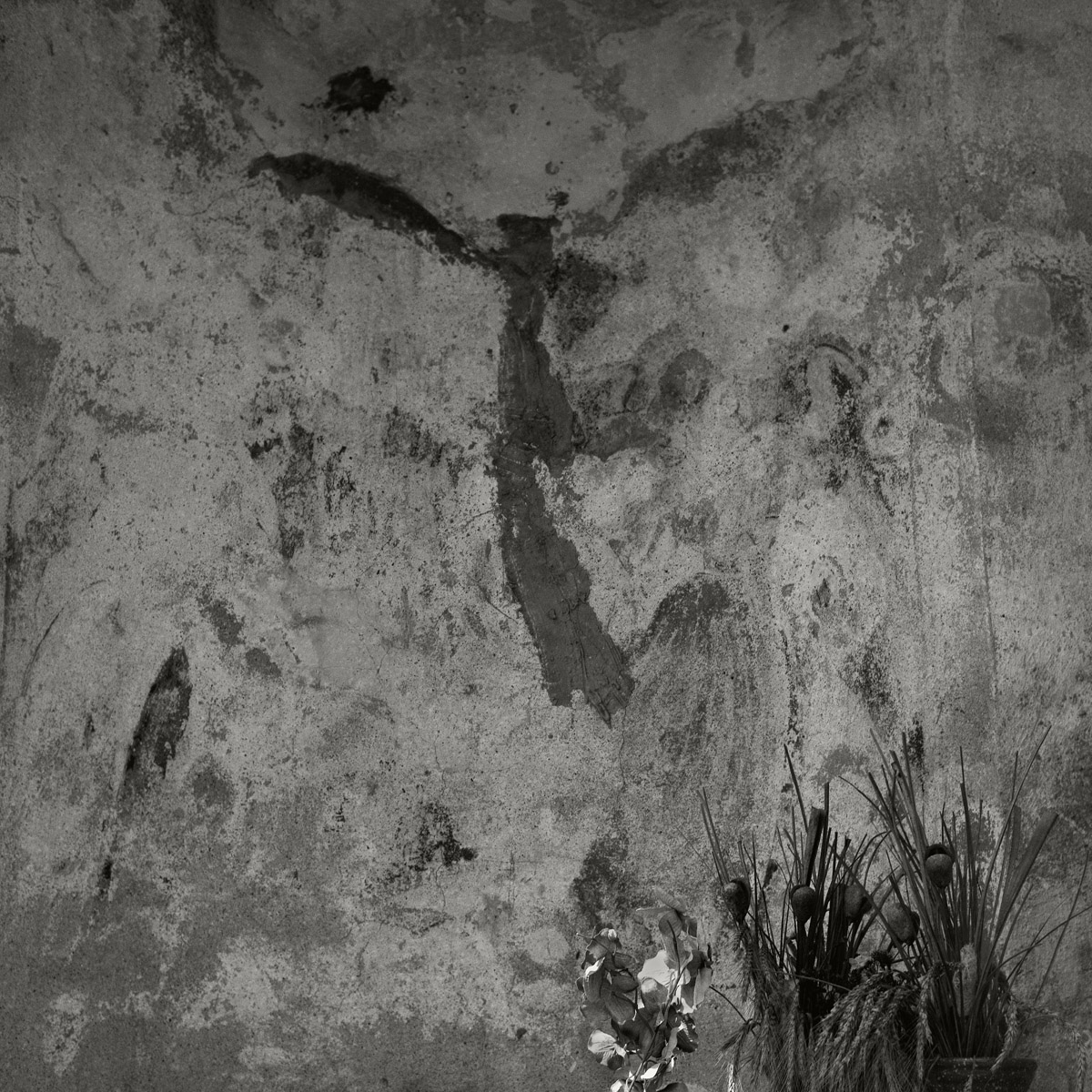 Ana Zibelnik White Devil06
