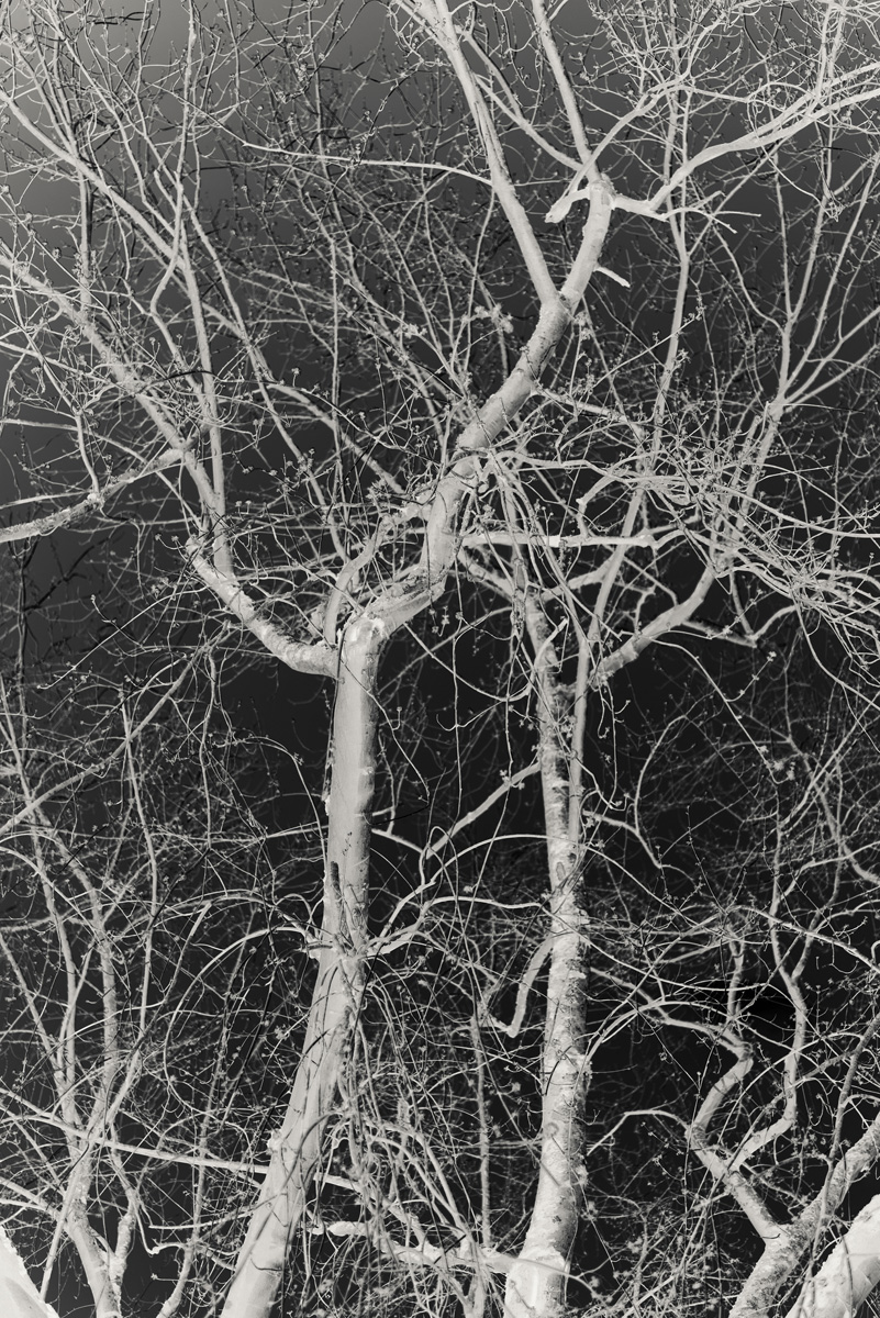 Chloé Milos Azzopardi Kind Of Ghosts C41magazine Photography 13