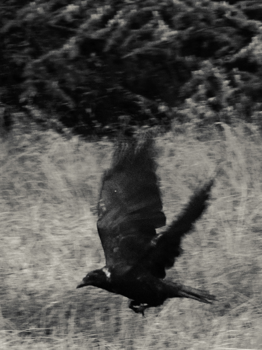 Chloé Milos Azzopardi Kind Of Ghosts C41magazine Photography 18