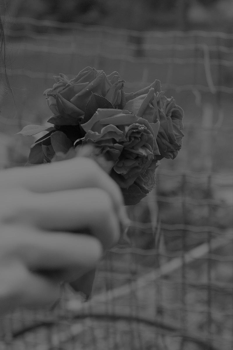 Rosa Lacavalla Sana Sana C41magazine Photography 3
