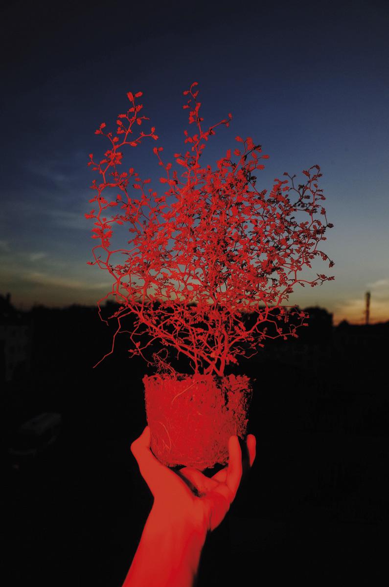 Max Slobodda Stranger Things C41magazine Photography 8