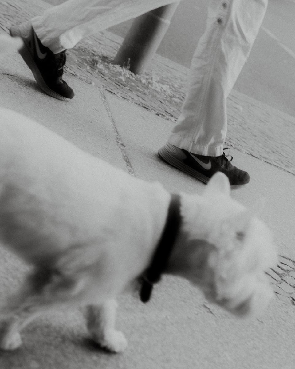 Hund (Kantstraße, Berlin).