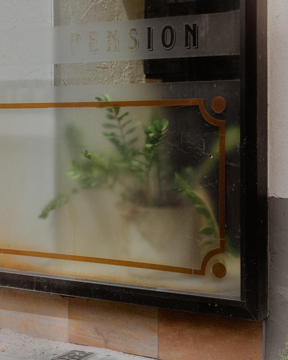 Pflanze Am Schaufenster Einer Pension (Kantstraße, Berlin).