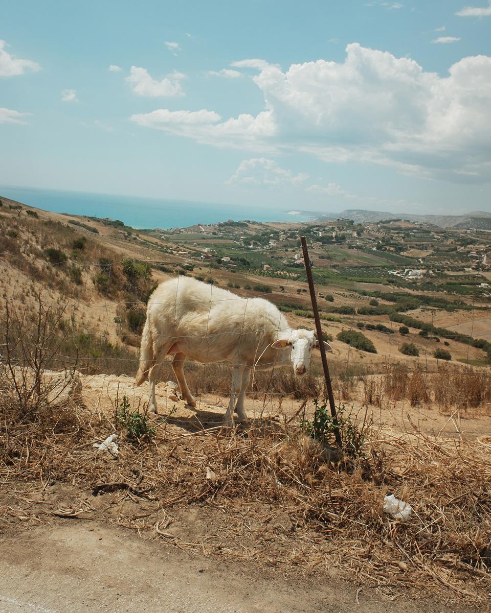 Leandro Colantoni Non So Dare Un Nome A Quell'estate C41magazine Photography 10